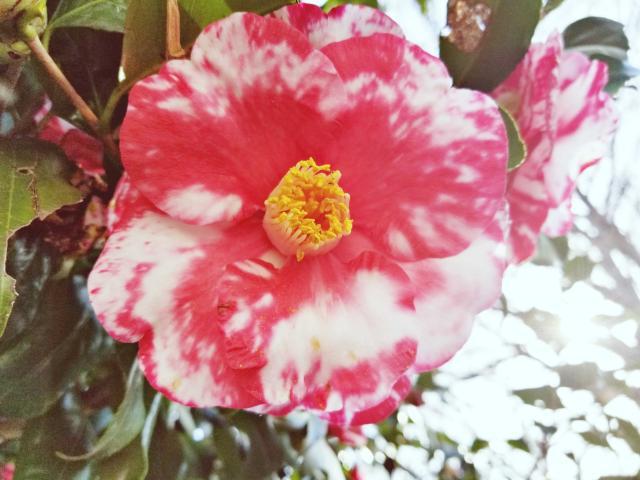 まぁ〜るい綺麗なピンク色のおっぱいに・・・