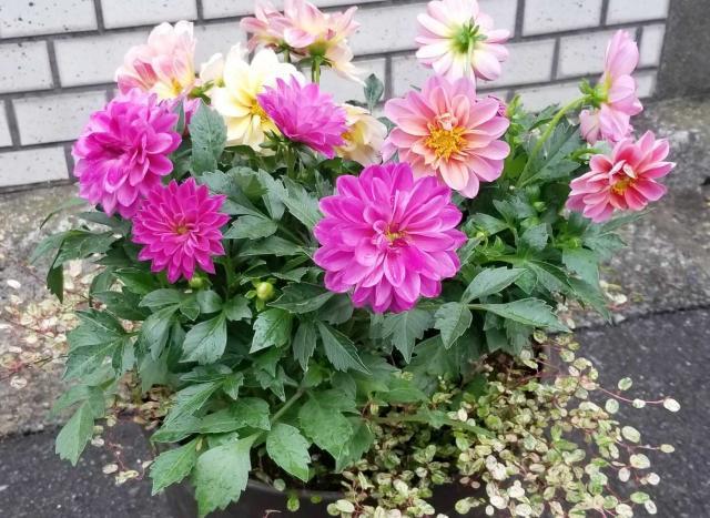お花が大好き(*^-^*)
